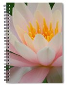 Water Lily II - Close Up Spiral Notebook