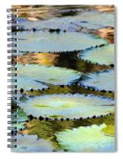 Water Lily Pads In The Morning Light Spiral Notebook