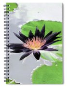Water Lily - Purple Power - Photopower 1376 Spiral Notebook