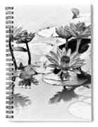 Water Lily Study - Bw Spiral Notebook