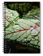 Water On The Leaves Spiral Notebook