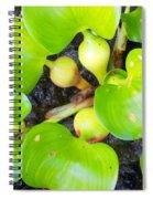 Water Plants 1 Spiral Notebook
