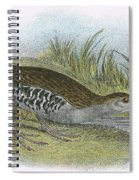 Water Rail Spiral Notebook