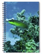 Water World Three Spiral Notebook