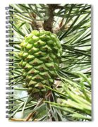 Watercolor Of Ripening Pine Cone Spiral Notebook