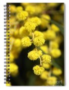 Wattle Flowers Australian Native Spiral Notebook