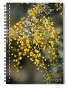 Wattle Flowers Spiral Notebook