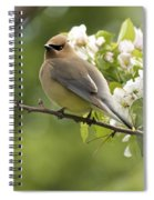 Waxwing In A Dream Spiral Notebook
