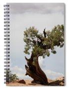Weatherbeaten Juniper Spiral Notebook