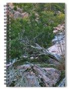 Weathered Cedar Overlooking The Castor River Spiral Notebook