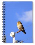 A Gazing Weaver Spiral Notebook