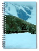 Weddell Seal Spiral Notebook