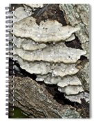 Weep No More My Baby - Bracket Fungi - Tyromyces Balsamea Spiral Notebook