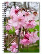 Weeping Cherry Blossoms Spiral Notebook