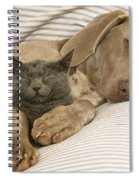 Weimaraner Asleep With Cat Spiral Notebook
