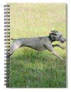 Weimaraner Dog Running Spiral Notebook