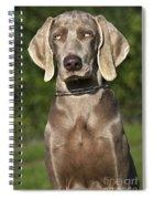 Weimaraner Hunting Dog Spiral Notebook