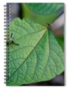 Well Dressed Hymenopteran Spiral Notebook
