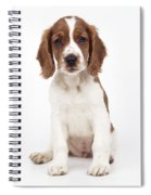 Welsh Springer Spaniel Dog Spiral Notebook