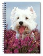 West Highland Terrier Dog In Heather Spiral Notebook