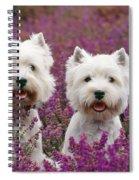 West Highland Terrier Dogs In Heather Spiral Notebook