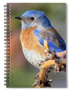 Western Bluebird Profile Spiral Notebook