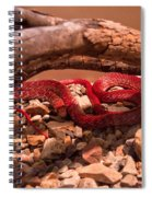 Western Coachwhip Red Phase Spiral Notebook