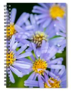 Western Daisies Asters Glacier National Park Spiral Notebook
