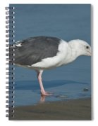 Western Gull Eating Clam Spiral Notebook