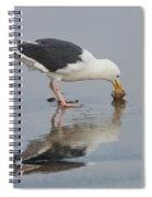 Western Gull Eats Clam Spiral Notebook