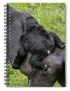 Western Lowland Gorilla 1 Spiral Notebook