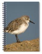Western Sandpiper Calidris Mauri Spiral Notebook