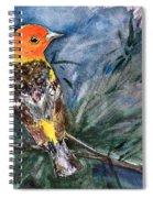 Western Tanager At Mt. Falcon Park Spiral Notebook
