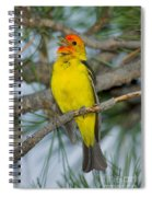 Western Tanager Singing Spiral Notebook