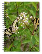 Western Tiger Swallowtail Butterflies Spiral Notebook