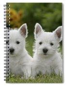 Westie Puppies Spiral Notebook