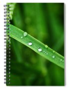 Wet Grasses Spiral Notebook