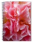 Wet Hollyhock Flower Upclose Spiral Notebook