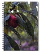 Wet Peach Spiral Notebook