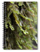 Wet Redwood Branches Spiral Notebook