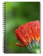 Wetback Spiral Notebook