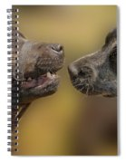 What Lovely Teeth You Have Spiral Notebook