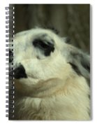What So Funny Spiral Notebook
