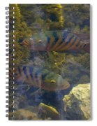 What You Looking At Spiral Notebook