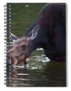 Whats Up Spiral Notebook