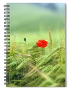 Wheatfield Poppy Spiral Notebook