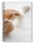 Whelk Shell New Jersey Beach Spiral Notebook