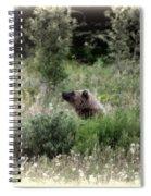 When Bears Dream Spiral Notebook