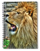 When He Speaks...they Listen...lazy Boy At The Buffalo Zoo Spiral Notebook