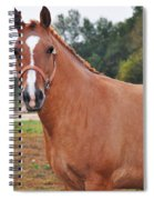 When You Look Me In The Eyes Spiral Notebook